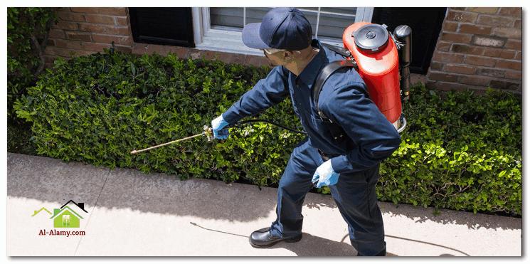 شركة مكافحة حشرات المنزل بالرياض