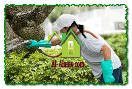 شركة رش مبيدات حشرات بالرياض