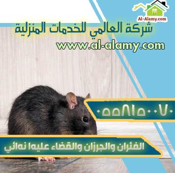 الفئران والجرذان والقضاء عليها نهائي