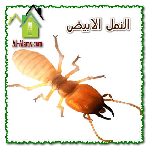 النمل الابيض1