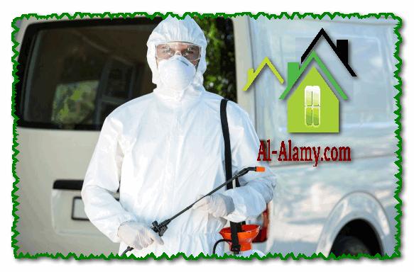 شركة مبيدات الحشرات بالرياض