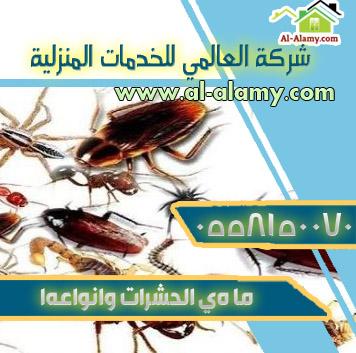 ما هي الحشرات وانواعها