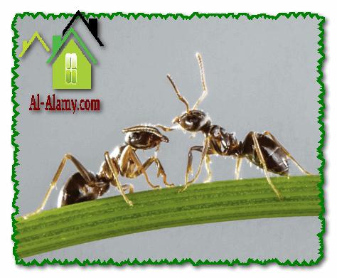 أنواع الحشرات التي توجد بالمنزل
