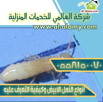 انواع النمل الابيض وكيفية التعرف عليه