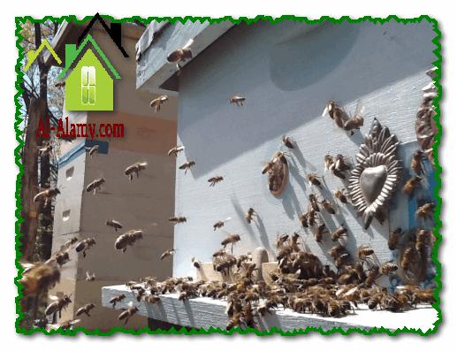 مكافحة النحل بالرياض