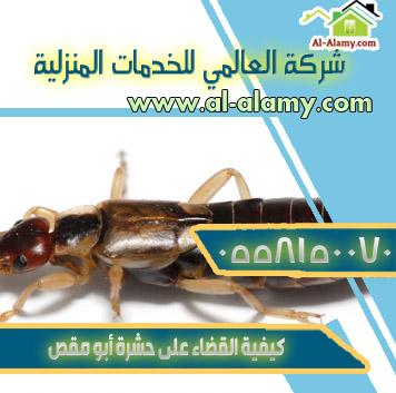 كيفية القضاء على حشرة أبو مقص