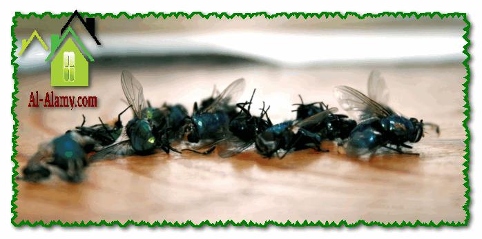 مكافحة الذباب والناموس بالرياض